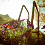 flowers_images